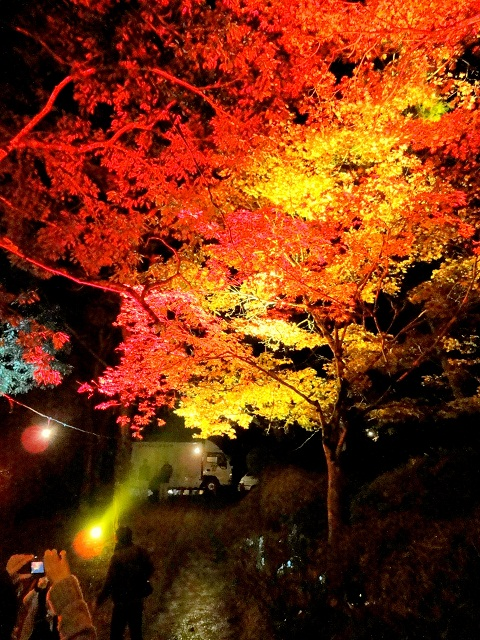 momiji-lightup1-1-640.jpg